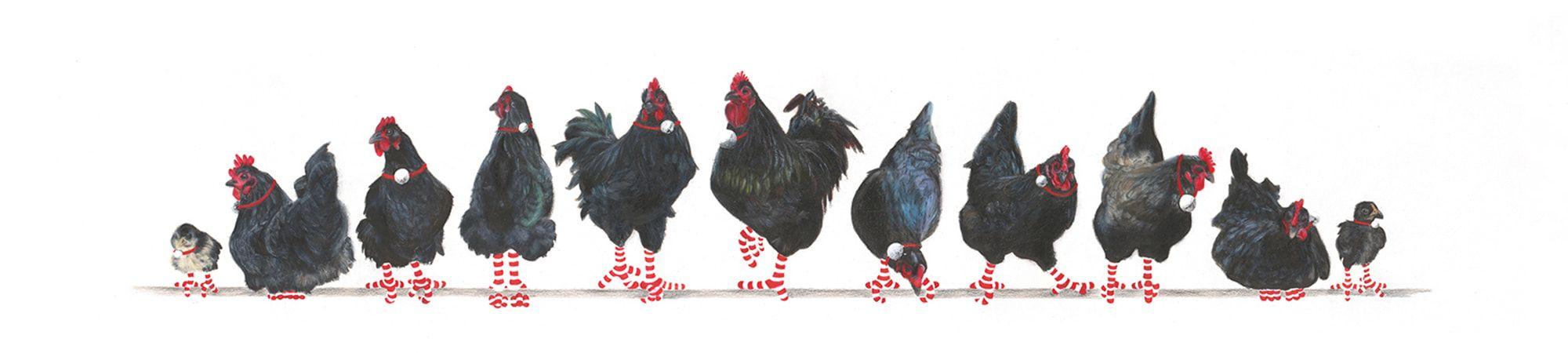 11-Australorps-Banner-2-Christmas-2020