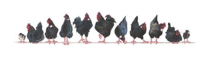 11-Australorps-Artworks-Page-Christmas-2020